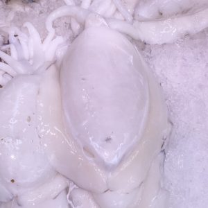 sipia blanca
