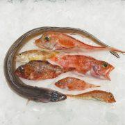 peix de roca fumet